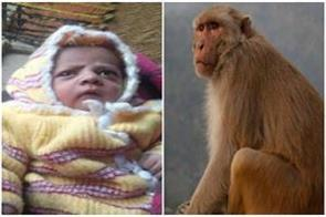 agra infant baby was killed by monkey