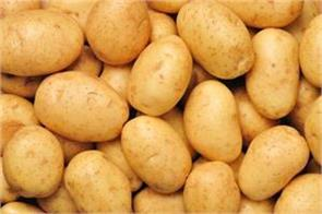 potato prices fall to rs 1000 loss of crores of rupees to farmers