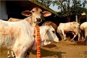 bjp s promise in telangana 1 lakh people will get free cow every year