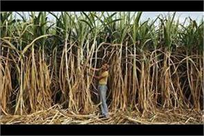 sugarcane farmers want 400 rupees per quintal