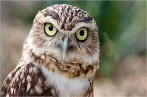 telangana assembly owls being missing from karnataka defeat election opponents