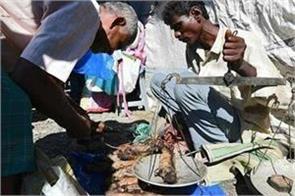 assam rat chicken guwahati farmers