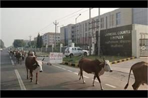 near the file administration 250 animal slurry cows not shifted