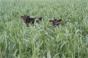 demand for loss of animals in crop insurance