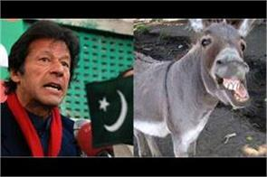 pakistan becomes third largest country in donkey