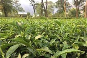 tripura taking measures to facilitate tea export to b desh