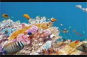 australia launch  2 million to save great barrier reef
