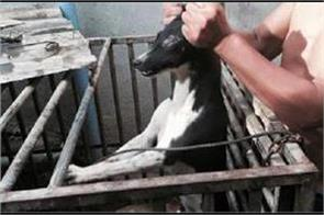 dogs burned alive for meat in indonesia