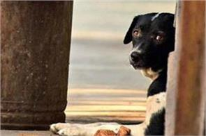 a dog curious routine at kanjurmarg station