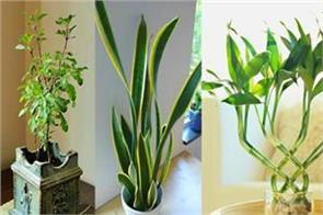 vastu shastra tips for plants