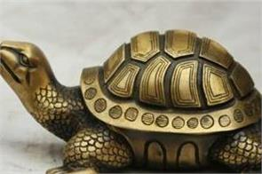 put metal turtle in the house will improve economic conditions