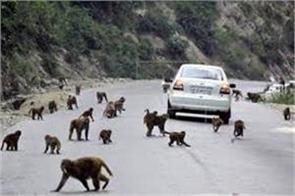 govt will plant fruits palnts for monkeys