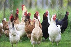j and k spending rs 2000 crores annually on import of poultry products