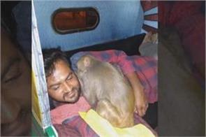 bengaluru drunk monkey creates ruckus at bar