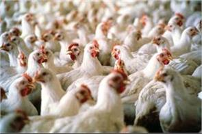 saudi arabia imposes a temporary ban on poultry imports from india