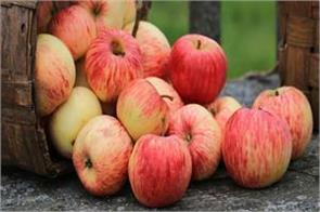 govt relaxes apple import norms