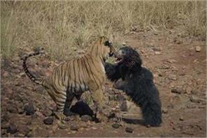 maharashtra social media akshay kumar lion bear