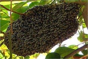 satna hundreds killed in bees attack