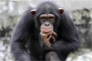 first time monkeys were found in hiv