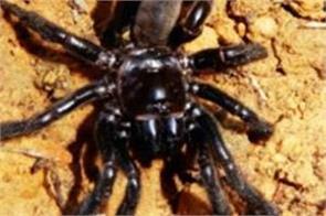 world s oldest spider dies aged 43 in australia