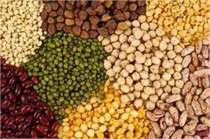 pulses rise on stockists buying
