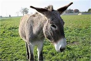 jkssb issued admit card to donkey