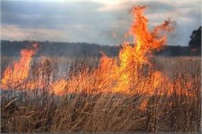 field fire 12 acres of ash crop