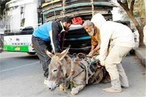 pakistan number of donkey increased economic survey growth rate