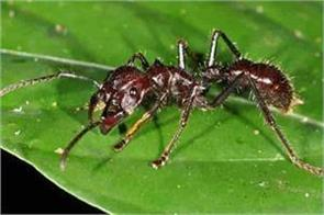 indian woman dies in saudi arabia by biting ant