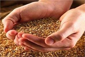 more than 87 05 lakh metric tonnes of wheat arrival