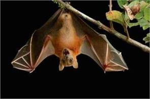 nipah virus 11 deaths in kerala