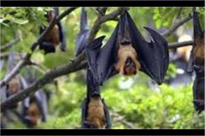 health care department releases advisory on nipah virus these caution