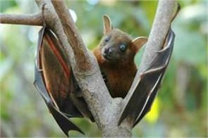 nipah virus patients can go to coma in 48 hours government warns