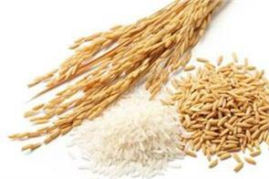 ration of wheat and rice will not increase for one year