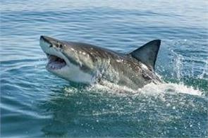 shark fishes more inteligent infront then human mind
