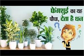 this plant of feng shui gives wealth