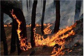fire in the forest of rajouri