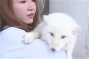 dog bought in 13 thousand but it turned out to be something else view photos