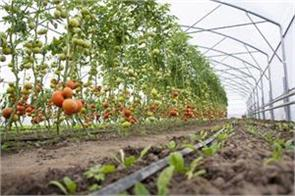 production of horticultural crops increased by 44 in 10 years