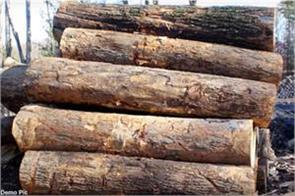bo forest guard suspend in wood stolen case