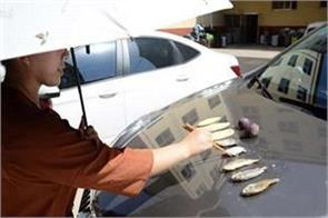 the effect of heat here is cooked on the bonnet of the fish pics