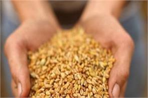 government has procured record 35 million tonnes of wheat
