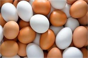 40 lakh eggs removed from poland market