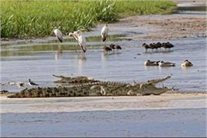 the crocodile attacked the church of the baptism the attack on the spot
