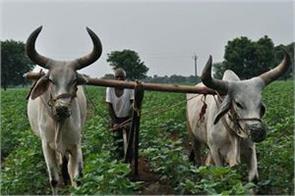 nipah saudi qatar shock the indian farmers