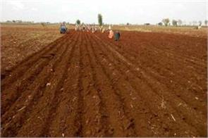 due to heavy shortage of rain cotton and oilseeds affected