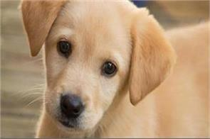 divorce on husband s wife due to dog custody