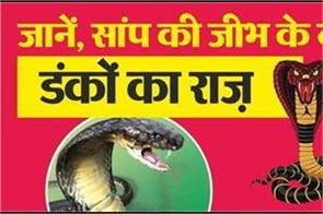 secret of snake s tongue