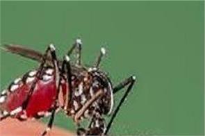 dengue outbreaks in bilaspur
