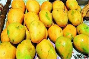 mango festival mango delhi haat
